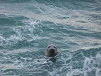 Seals Carbis Bay