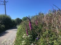 Wild flower hedge