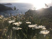 Wild Flowers on coast path